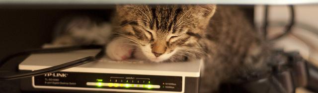 Cat sleeping on Gigabit Switch